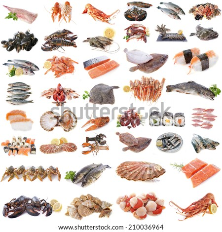 seafood, fish and shellfish in front of white background - stock photo