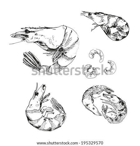 Seafood. Shrimps. Hand drawn illustration. - stock photo