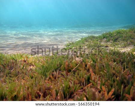 Seagrass and sand  - stock photo