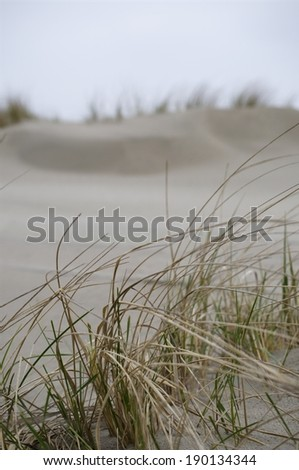 Seagrass, Dunes and Sand