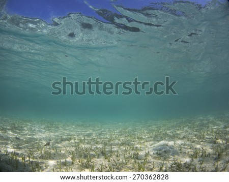 Seagrass meadow in the shallow zone of the Surin Islands, Thailand. - stock photo