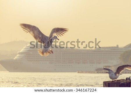 Seagull against a background of water