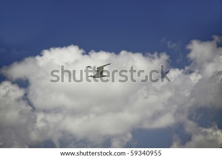 seagull and cloudy sky