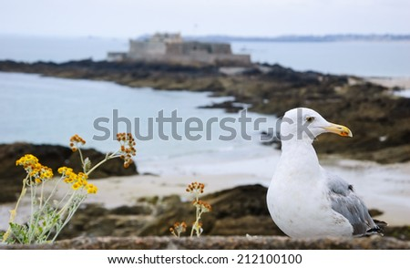 Seagull and wild flowers on the ramparts of Saint Malo and the view on Fort National (on a tidal island). Brittany, France. Selective focus on the gull. - stock photo