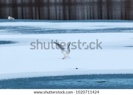 seagull at a frozen lake