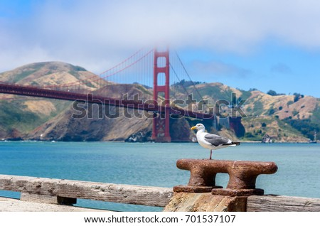 Seagull at Pier and Golden Gate Bridge in San Francisco, California, USA