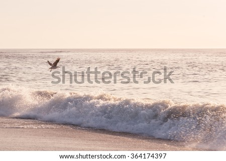 Seagull at Sunrise at the Beach