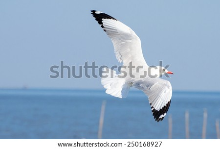 Seagull bird flying in the blue sky, Freedom concept