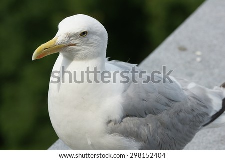 Seagull bird in the city in summer season