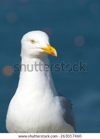 Seagull bird looking for food, blue sea background. - stock photo