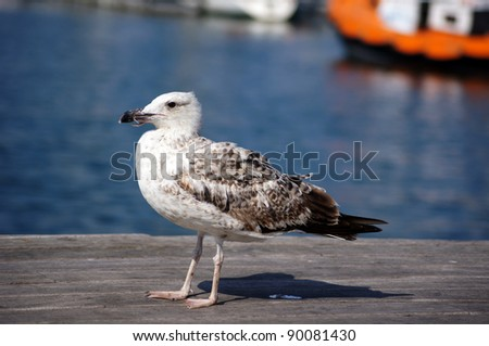 Seagull bird on the pier