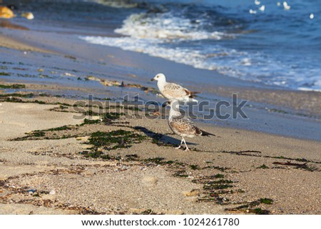 Seagull by the sea on the beach