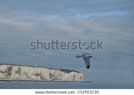 Seagull flies over the end of the White Cliffs of Dover