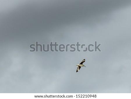 seagull flies under the dark rain clouds - stock photo