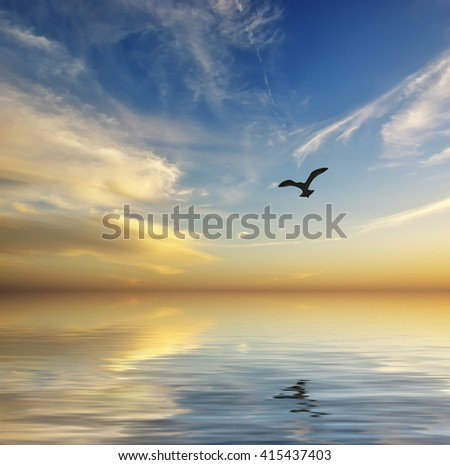 Seagull floating on the waves