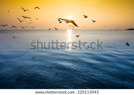 Seagull flock at sunset