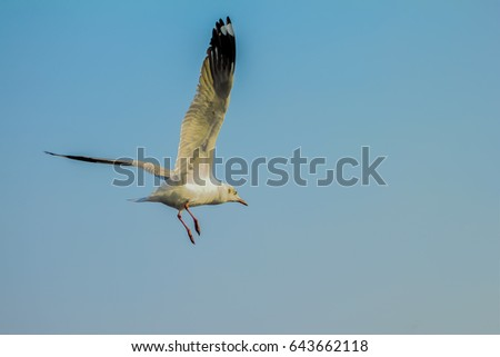Seagull fly in the blue sky
