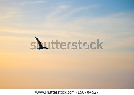 Seagull fly in the sky