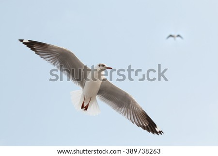Seagull fly in the sky at Bang Pu,Thailand.