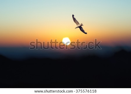 Seagull fly over the shore in the sunrise. Big sun ball over the mountains on the horizon.