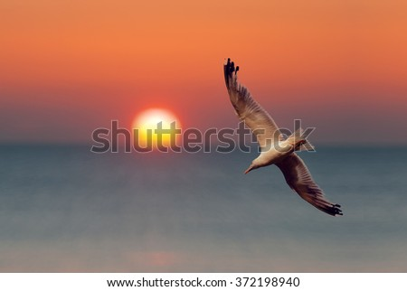 Seagull fly over the shore in the sunrise. Big sun ball over the sea on the horizon.