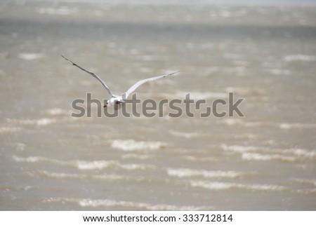 Seagull flying above ocean - stock photo