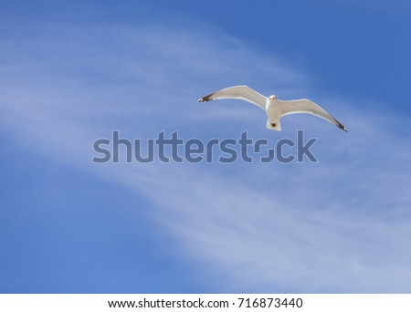 Seagull flying against a cloudy sky - plenty of copyspace for your message.