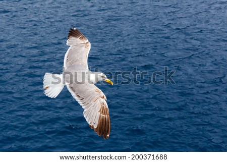Seagull flying against the blue sea as a background - stock photo