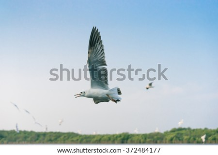 Seagull flying among blue sky