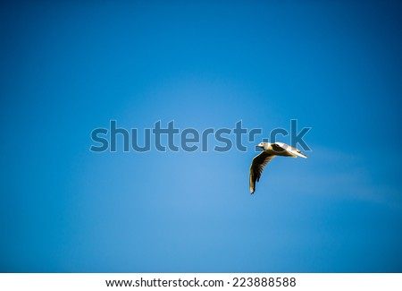 seagull flying among the pure blue sky - stock photo