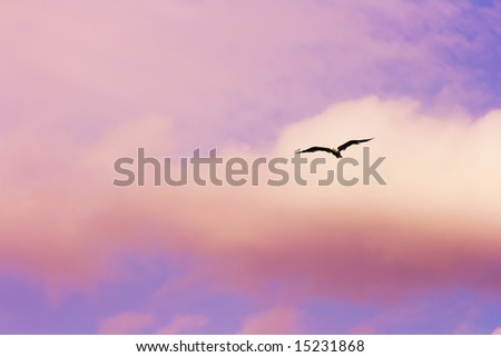 Seagull flying at the sunset sky - stock photo