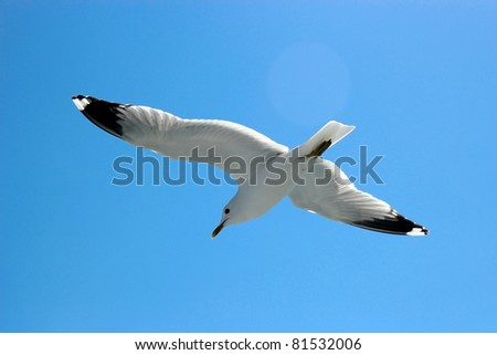 Seagull flying high up in the sky - stock photo