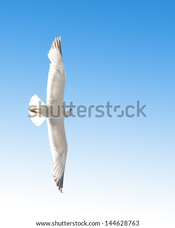 Seagull flying in the blue sky. Close-up.