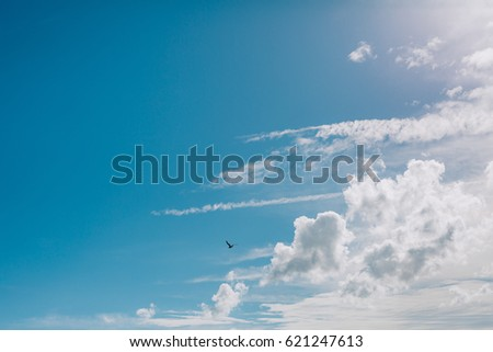 Seagull flying in the sky. Montenegro, Adriatic sea