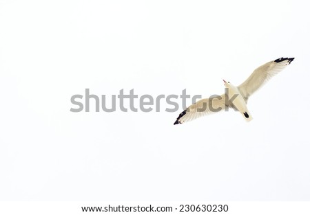 Seagull flying in the sky. Place for your text. - stock photo