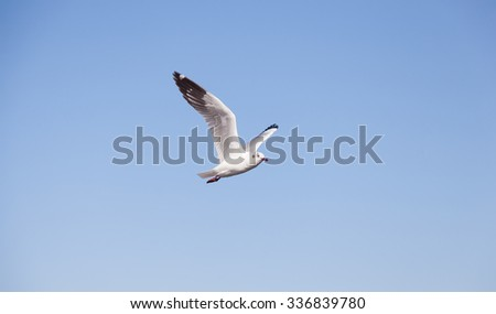 Seagull flying in the sky. Seagull foraging and migration. - stock photo