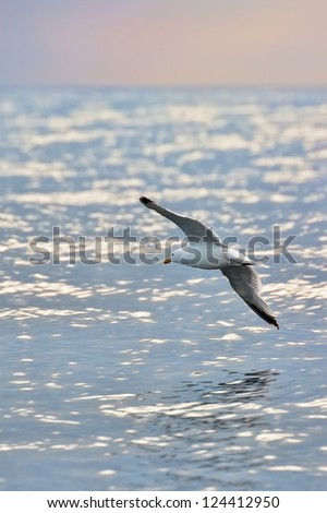 Seagull flying low above the sea