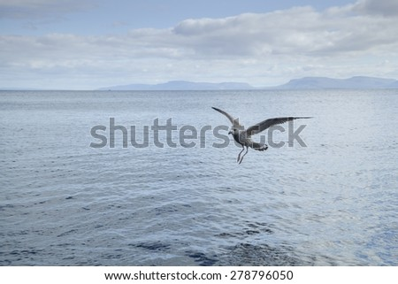 Seagull flying near the surface of the water