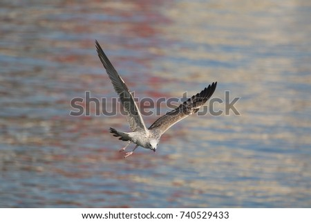 Seagull flying. Nice sea view and background.
