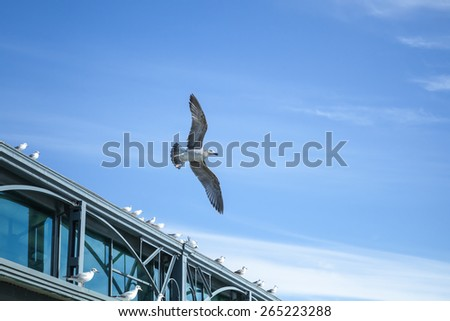 Seagull flying on sky background near the pier building
