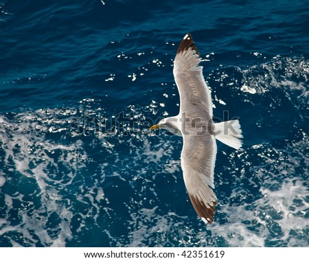 Seagull flying over blue water - stock photo