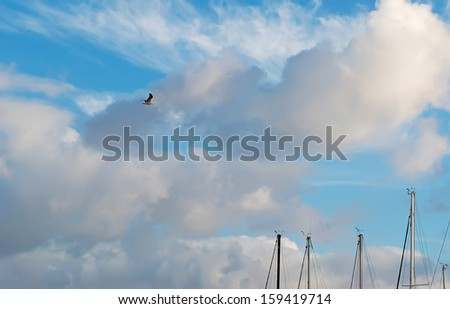 seagull flying over boat masts on a cloudy day - stock photo