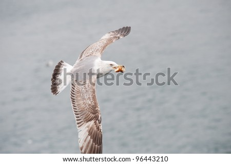 Seagull flying over the water - stock photo