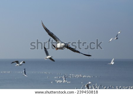 Seagull flying under the sky at Bang Pu beach, Thailand