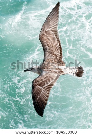 Seagull front of the sea - stock photo