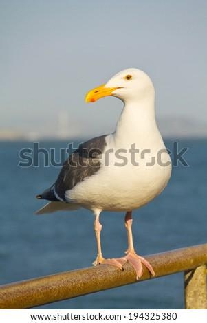 seagull in californian rust pier - stock photo