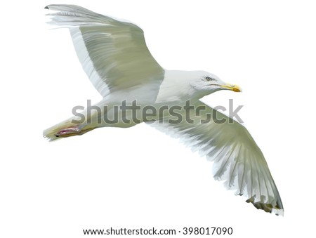 Seagull in flight isolated on white background - stock photo