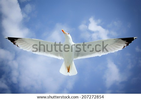 Seagull in Greece, Europe