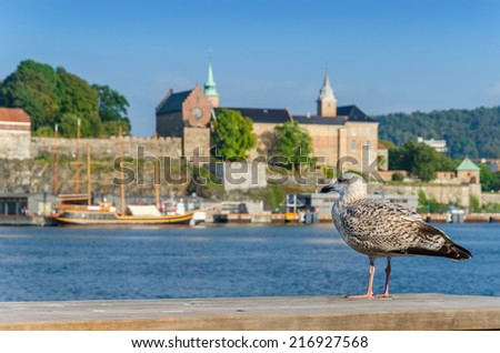 Seagull in harbor in front of Akershus fortress with wooden yacht in background, Oslo, Norway  - stock photo