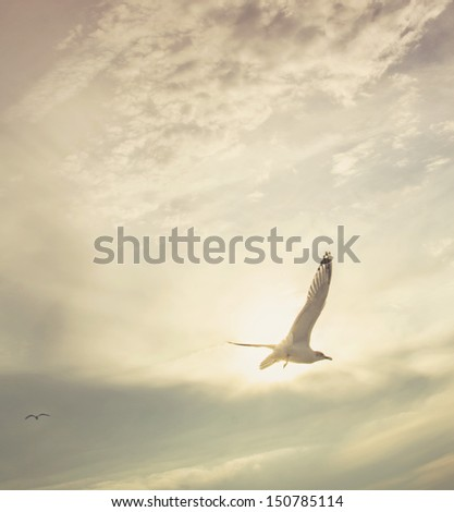 Seagull in Sunset - stock photo